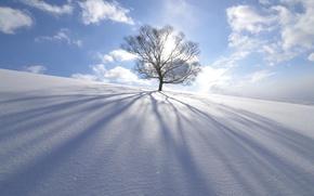 Wallpaper winter, the sun, snow, nature, tree