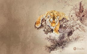 Picture animals, tiger, figure