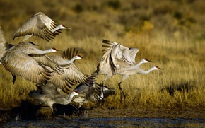 Picture POND, PACK, BIRDS, STORKS