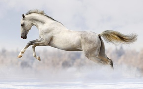 Picture winter, snow, horse, jump, horse, running, white, bokeh