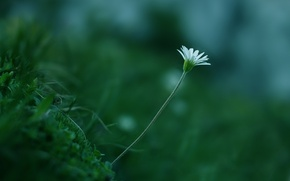 Wallpaper greens, white, flower, grass, macro, plant, color, stem