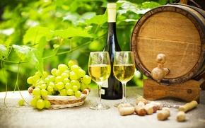 Wallpaper greens, table, wine, bottle, garden, glasses, grapes, tube, barrel, corkscrew