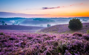 Picture fog, dawn, hills, field, morning, space, meadows, lavender