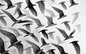 Picture the sky, flight, birds, Wallpaper, wings, pack