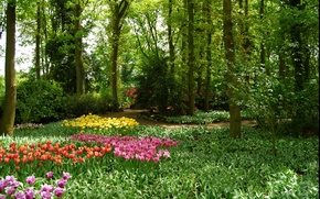 Picture greens, trees, flowers, Park, spring, garden, tulips, Nature, trees, park, flowers, garden, tulips, spring