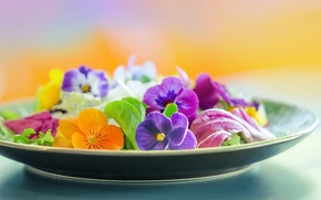 Picture macro, flowers, petals, plate, Pansy