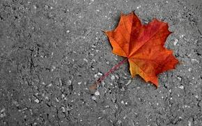 Picture cold, road, autumn, asphalt, sunset, orange, yellow, sheet, dawn, Maple, maple leaf, Golden autumn