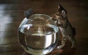 Picture water, aquarium, kitty, chicken, familiarity