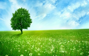 Wallpaper field, the sky, clouds, tree, blue, space, dandelions, green, alone, dandelions, Greenlands, silent tree