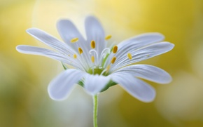 Picture flower, plant, petals, stem, stamens