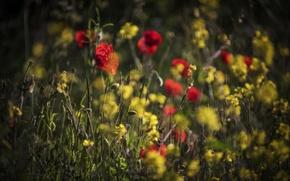 Wallpaper summer, field, flowers