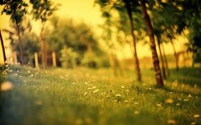 Picture field, forest, summer, grass, glade, dandelions