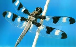 Wallpaper macro, the sky, flight, dragonfly