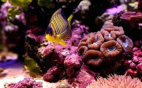 Picture sea, macro, fish, the bottom, corals
