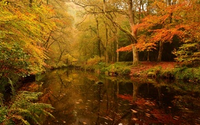 Picture River, Forest, Trees