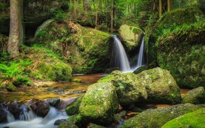 Picture forest, water, river, stones, moss