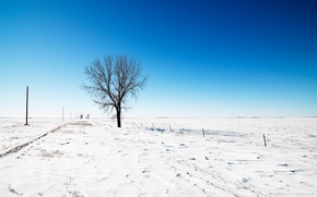 Picture road, the sky, snow, tree, Winter