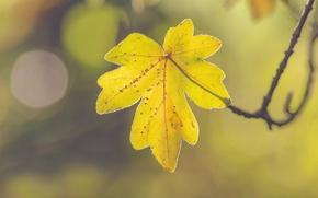 Picture autumn, leaf, sunny