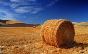 Picture field, stack, hay