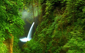 Picture forest, trees, nature, river, waterfall, Oregon, gorge, USA