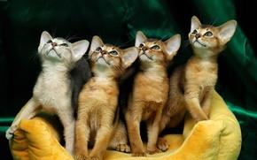 Picture kittens, faces, Quartet