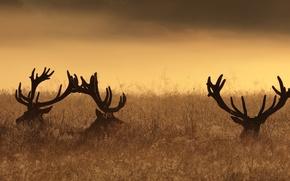 Wallpaper night, deer, nature