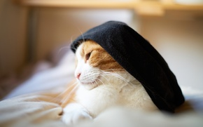 Picture cat, cat, clothing, white-red