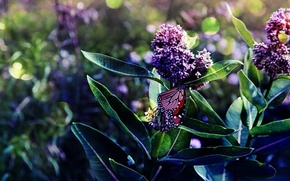 Wallpaper lilac, flowering, branches, butterfly, leaves