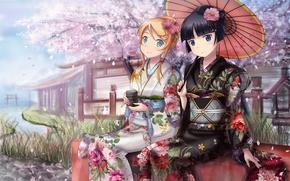 Picture river, umbrella, girls, tea, umbrella, petals, Sakura, kimono, ore no imouto ga konnani kawaii wake …