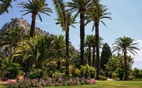 Wallpaper flowers, palm trees, Park, lawn, France, Menton, grass