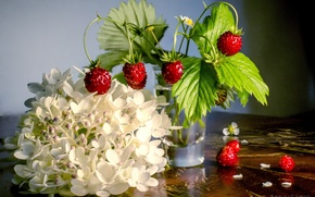 Picture flowers, berries, background