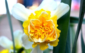 Picture flower, yellow, green, flower, yellow, bright