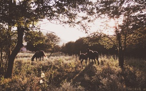 Picture trees, nature, horse