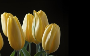 Picture leaves, nature, background, petals, tulips
