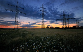 Picture field, summer, the sky, grass, clouds, trees, sunset, flowers, chamomile, the evening, Glade, power lines
