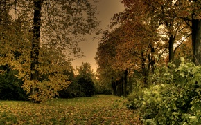 Picture leaves, trees, Park, the evening, Autumn, falling leaves, trees, nature, park, autumn, leaves, evening, path, …
