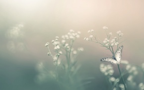 Wallpaper bokeh, butterfly, Insect, flower, fog