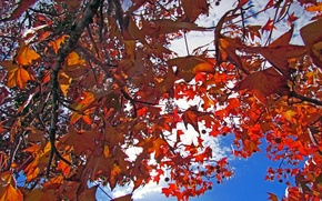 Picture autumn, the sky, leaves, clouds, trees, branches, the crimson