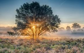 Wallpaper Nijverdal, national park, dawn, Netherlands, Overyssel, morning, Holland