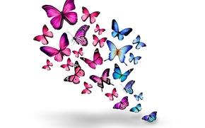 Picture butterfly, pink, blue, blue, pink, butterflies