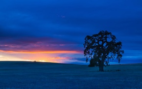 Picture field, the sky, clouds, landscape, tree, hills, the evening, glow