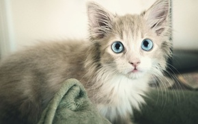 Picture cat, grey, blue