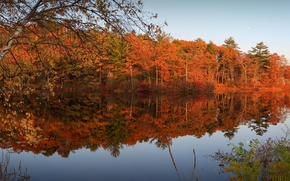 Picture autumn, forest, the sky, leaves, trees, river, the evening, the crimson
