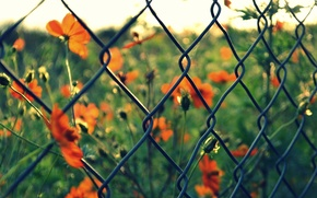 Picture greens, macro, flowers, red, background, mesh, widescreen, Wallpaper, blur, the fence, wallpaper, flowers, widescreen, background, …