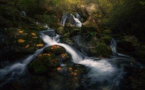 Picture autumn, forest, light, nature, river, stream, stream