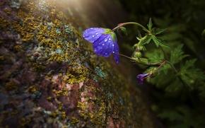 Wallpaper rock, macro, moss, flower, stone