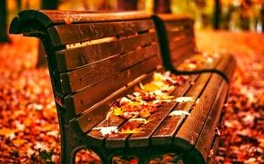 Picture leaves, bench, Park, Autumn