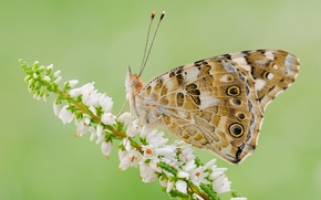 Wallpaper flower, butterfly, plant, wings, insect, moth