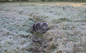 Picture frost, grass, grey, freezing, path. cat