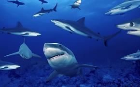 Wallpaper sea, depth, sharks